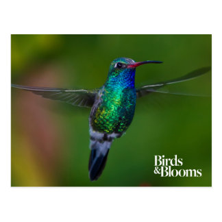 Floating Hummingbird Postcard