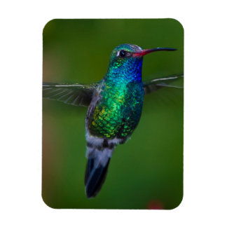 Floating Hummingbird Rectangular Photo Magnet