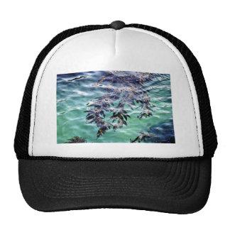 Floating Kelp Hat