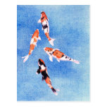 Floating Koi blue Postcard