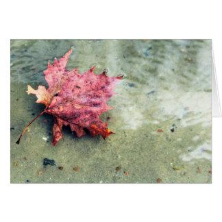 Floating Leaf Closeup Card