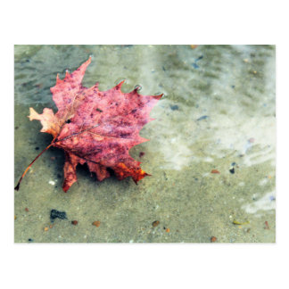 Floating Leaf Closeup Postcard