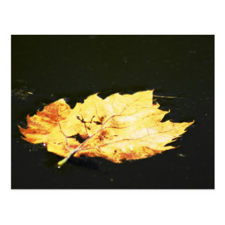 Floating Leaf Postcard