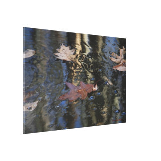 Floating Leaves Canvas Canvas Print