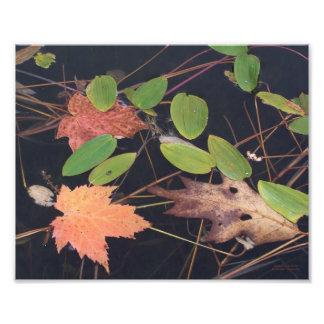 Floating Leaves Art Photo
