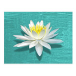 Floating Lily on Aquamarine Ripples Postcard