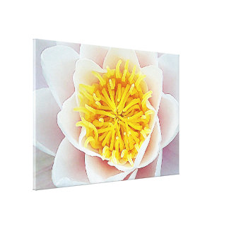 Floating Lotus Canvas Print