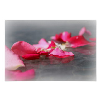 Floating Pink Rose Petals on Water Poster