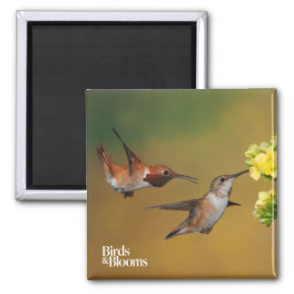 Floating Rufous Hummingbird 2 Inch Square Magnet
