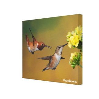 Floating Rufous Hummingbird Canvas Print