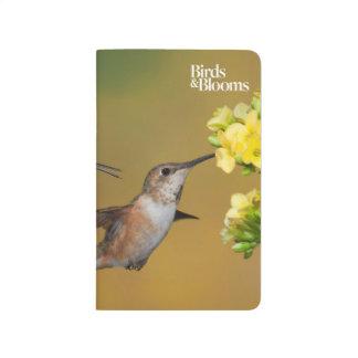 Floating Rufous Hummingbird Journal