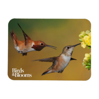 Floating Rufous Hummingbird Magnet
