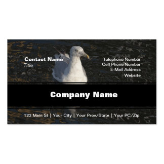 Floating Seagull Business Card
