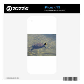 Floating turtle swimming in a pond iPhone 4S decal