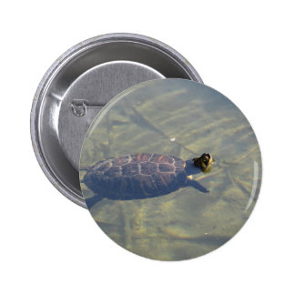 Floating turtle swimming in a pond pinback button