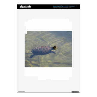 Floating turtle swimming in a pond skin for iPad 3