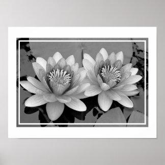 Floating Waterlily Lotus Poster