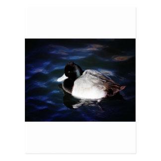Floating With Sunshine Postcard
