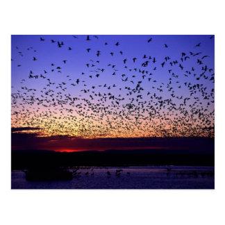 Flock at Sunrise Postcard