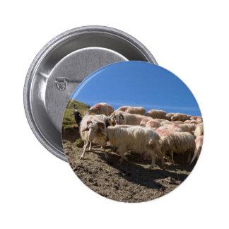 Flock of Basco Bearnaise Sheep at Arbaze Mountain Pinback Button