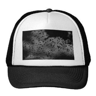 Flock of birds in ominous sky trucker hat