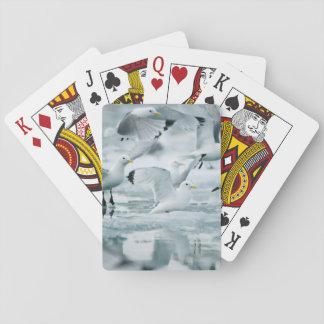 Flock of Black-legged Kittiwakes Playing Cards