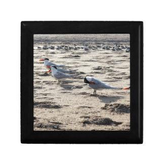 Flock of Caspian Tern Birds Gift Box