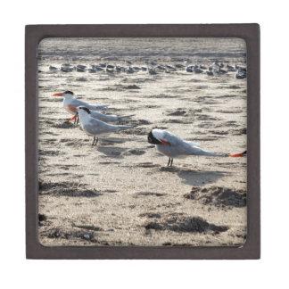 Flock of Caspian Tern Birds Keepsake Box