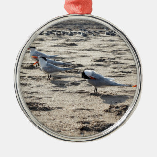 Flock of Caspian Tern Birds Metal Ornament