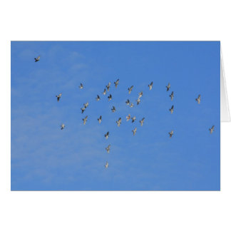 flock of doves greeting cards