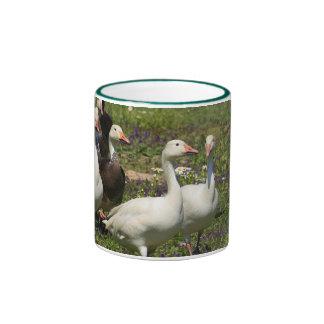 Flock of Ducks Coffee Mugs