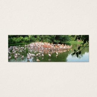 Flock of flamingo in water, mini bookmark mini business card
