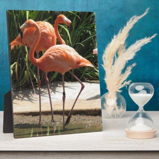 Flock of Flamingos Plaque