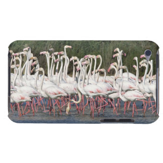 Flock of flamingos wading , France iPod Touch Case-Mate Case