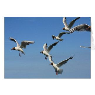 flock of flying gulls card