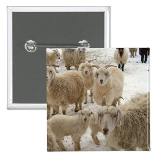 Flock of Goats Button