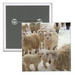 Flock of Goats Pins