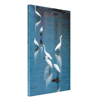 Flock of Great White Egrets/Herons Photography Canvas Print