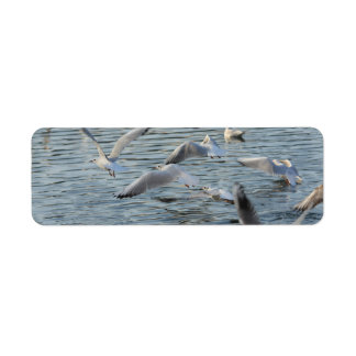 flock of gulls over water label