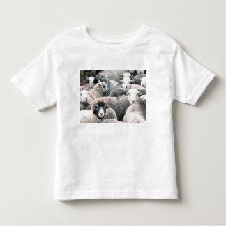 Flock Of Herdwicks T Shirt