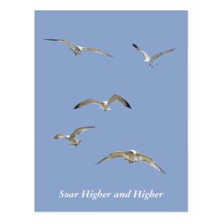 Flock of High-Flying Seagulls Postcard