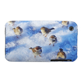 Flock of House Sparrows 'Passer domesticus' on iPhone 3 Case-Mate Case