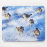 Flock of House Sparrows 'Passer domesticus' on Mousepads