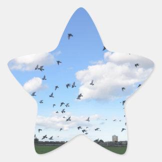 Flock Of Pigeons Star Sticker