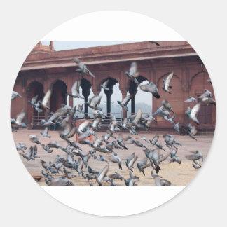 Flock of pigeons round stickers