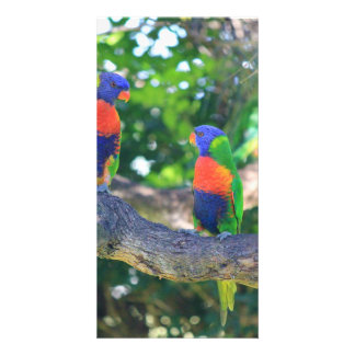Flock of Rainbow lorikeets on a branch of a Tree Card