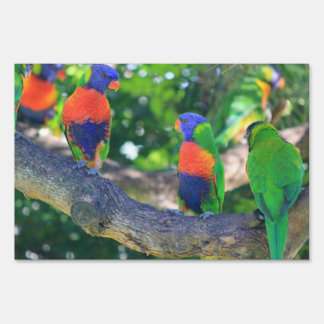 Flock of Rainbow lorikeets on a branch of a Tree Lawn Sign