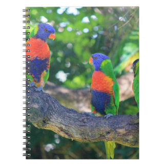 Flock of Rainbow lorikeets on a branch of a Tree Notebook