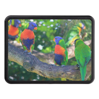 Flock of Rainbow lorikeets on a branch of a Tree Hitch Cover