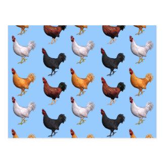 Flock Of Roosters Postcard